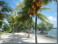 Reife Kokosnüße