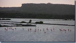 18 Flamingos